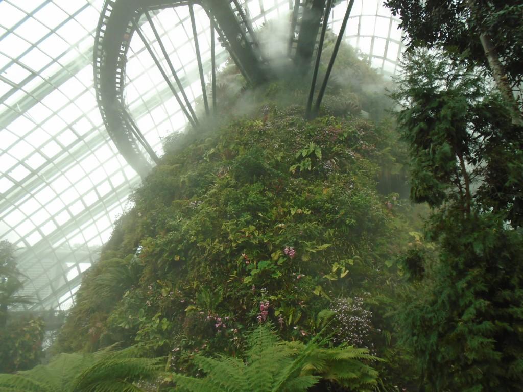 Cloud Forest2