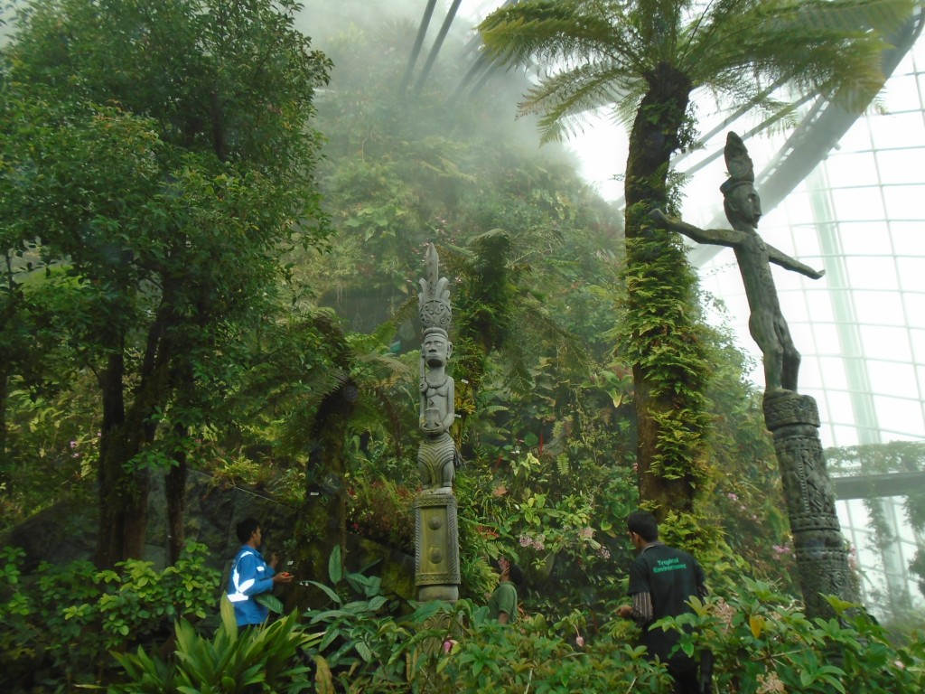 Cloud Forest5