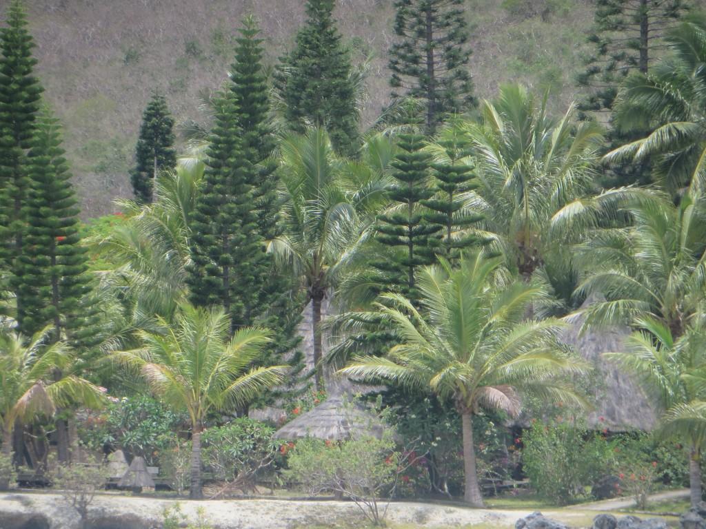 Kuendu trees