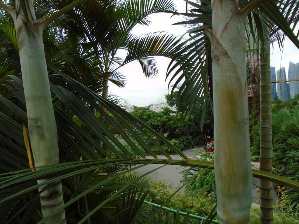 Singapore gardens3
